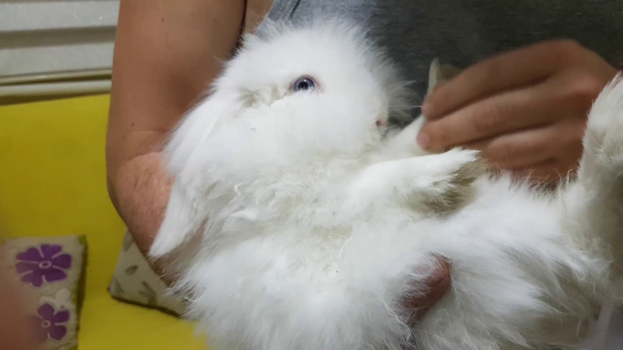 Tavşanın Özellikleri Nelerdir