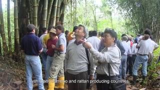 Proposing an International Standards Organisation Technical Committee for Bamboo and Rattan