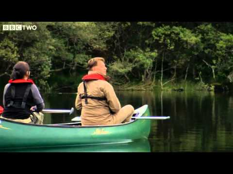 Wild British Beavers - The Animal's Guide To Britain, Episode 1 Preview - BBC Two