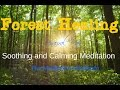 Forest Healing Meditation: soothing and calming, binaural beats.