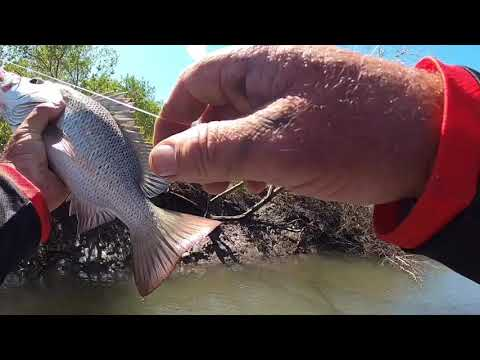 Lure Casting Townsville's Mangrove Jacks. Fun With Your Son.