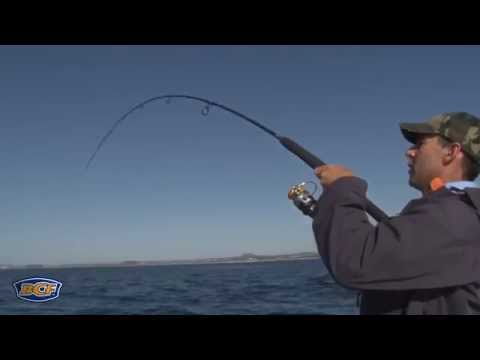 How to catch Reef Fish - Fishing - BCF