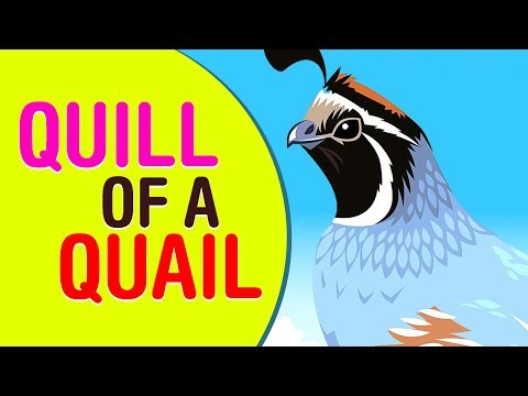Quill of a Quail Phonic Rhymes   #KidsLearning   #ChildrenRhymesSongs