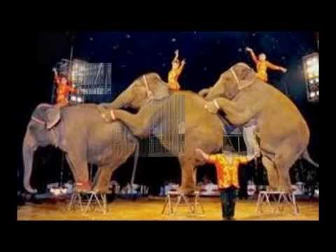 Ban animals from circuses!!