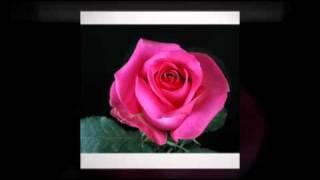 Blessed Rose