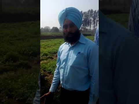 Vegetables Cultivation - Nursery Raising by Innovative Farmers Association (IFA)