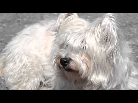 Using accupuncture to treat allergies in pets – from the House Call Vet NYC