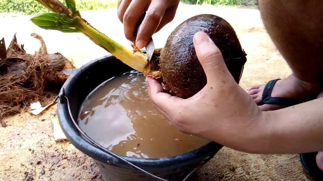 cara belajar membuat bonsai kelapa sederhana bagi pemula ...