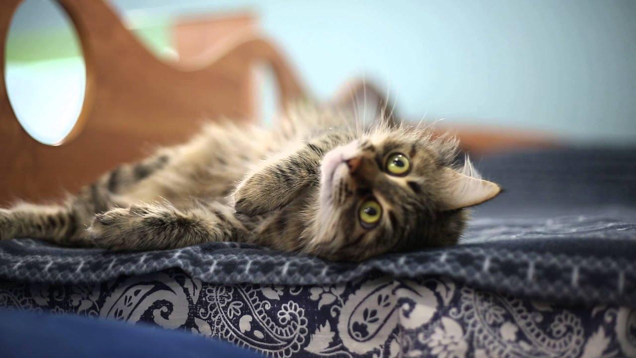 Песенка колыбельная для кота