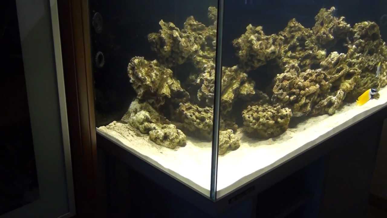 arriv 233 e des premiers poissons aquarium eau de mer hd