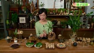 種子盆栽DIY教學 - 檳榔