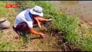 Угорь видео лова угря, или угорь рыба которая живёт в норе.
