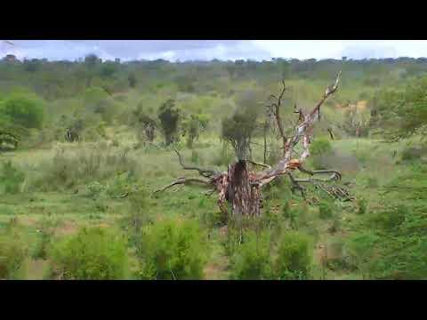 African River Wildlife Cam 03-15-2018 04:16:19 - 05:16:19