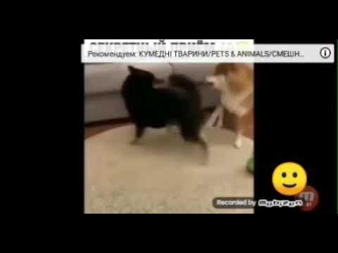 Я с каналом кроль Play смотрим смишное видео