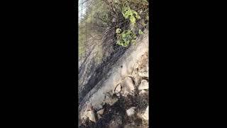 Campo e giardino devastati dalle fiamme a Ruvo di Puglia
