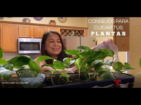 Como cuidar tus plantas - Abonos caseros y cuidados básicos con Adriana López en Telemundo 39