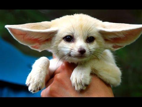 Смешные Милые Кролики 2015! Веселая Видео подборка!