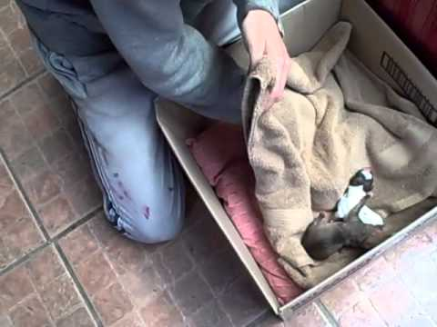 6 Pups found by the rubbish containers 2 October 2012