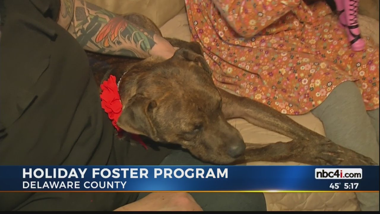 Delaware County Humane Society Dogs Give Thanks Youtube
