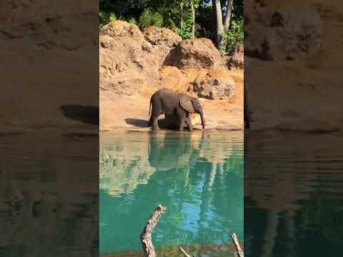 Kilimanjaro Safaris Tour Disney's Animal Kingdom Best Tour Guide 4K