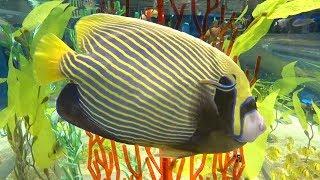 롯데월드 아쿠아리움 - 예쁜 물고기들 2, Cute T…