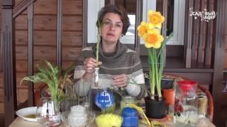 видео Как и для чего используется гидрогель