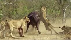 Ein Jahr in der afrikanischen Savanne - HD Deutsch [ arte Tierdokumentation ]