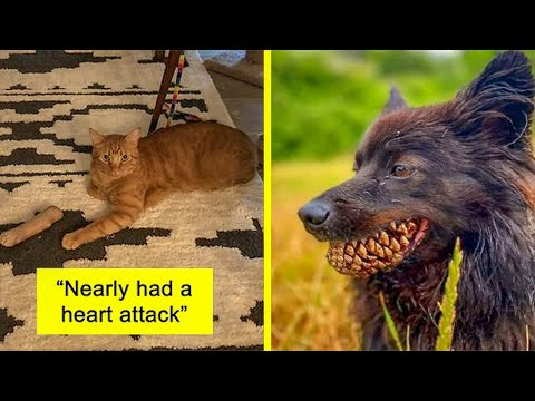 Pets Almost Gave Owners Heart Attack