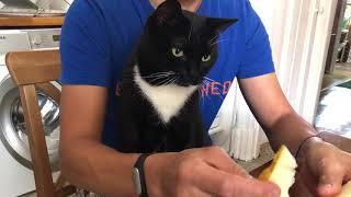 Кот Васька -очень любит дыню. #кот #дыня #котваська #котестдыню