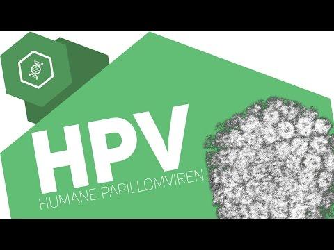 HPV / Humane Papillomaviren - Ein gefährliches Virus!