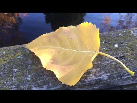 Awesome Autumn Fall In Park Melbourne, красивая золотая осень и природа Австралии