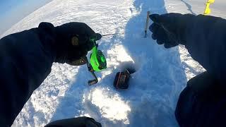 Рыбалка на судака в мороз zander icefishing