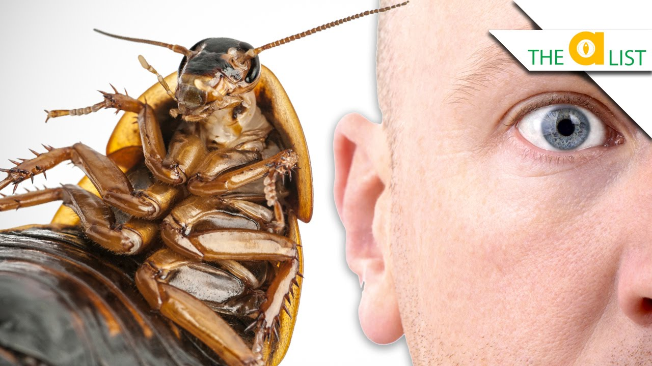 how to not bring bed bugs home from work