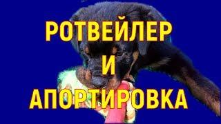 РОТВЕЙЛЕР И АПОРТ дрессировка и воспитание собаки