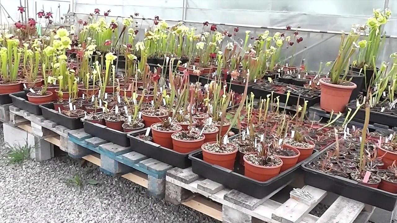 Carniplant jardiner a acolchado en las plantas arom ticas for Jardinera plantas aromaticas