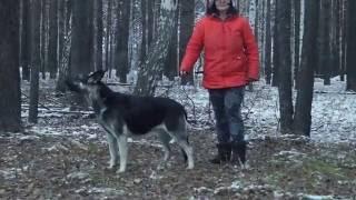 Как воют собаки от восторга