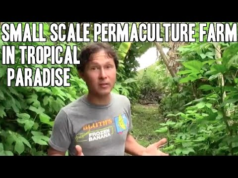 Small Scale Permaculture Eco Farm in Tropical Paradise