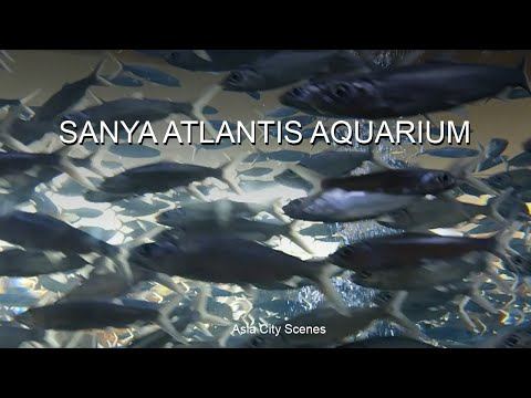 Sanya Atlantis Aquarium 1 Mute
