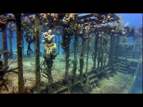 Bahamas Diving in 3D- Sharks, Shipwrecks, & Coral Reefs-  An Underwater  3D Channel Film