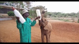 An Afternoon with Baby Elephants at the David Sheldrick Wildlife Trust
