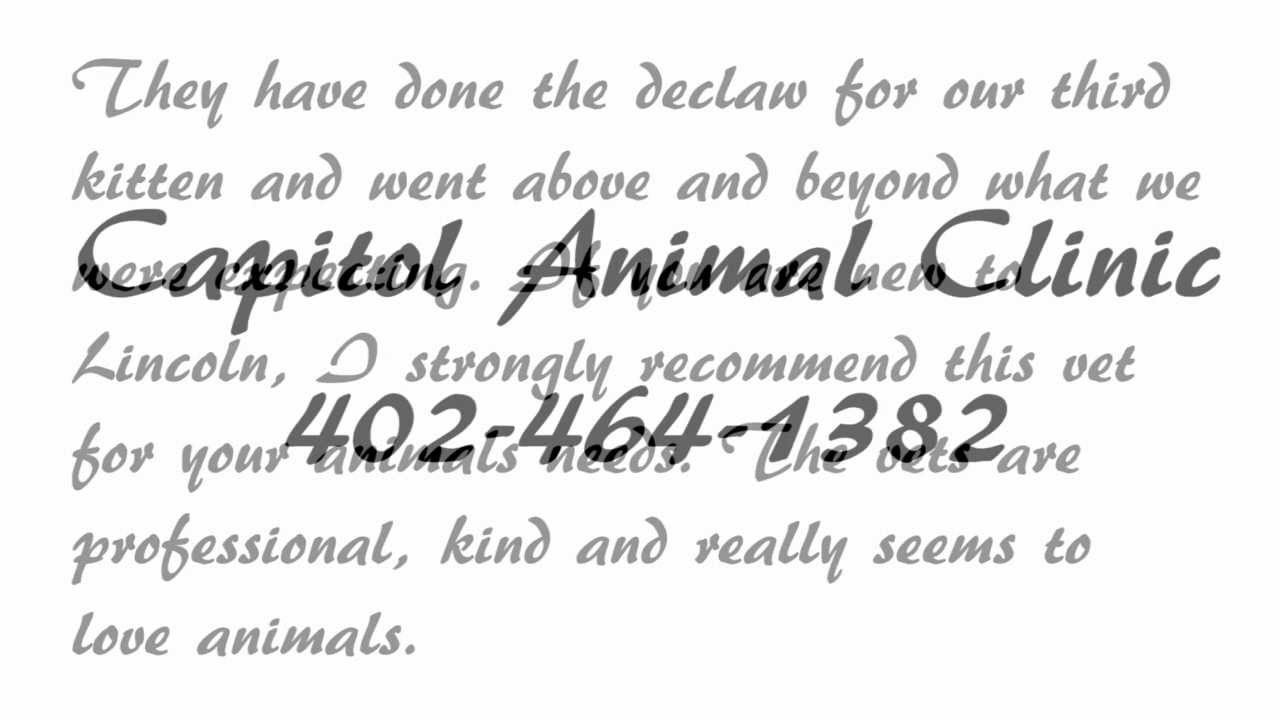 Capitol Animal Clinic Review Lincoln NE | review of better ...