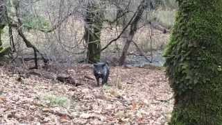 Lockwood Hunting Services - Wild Boar Hunting