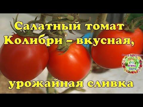 Салатный томат Колибри -  вкусная, урожайная сливка
