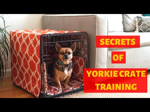 How to Crate Train a Yorkshire Terrier Puppy