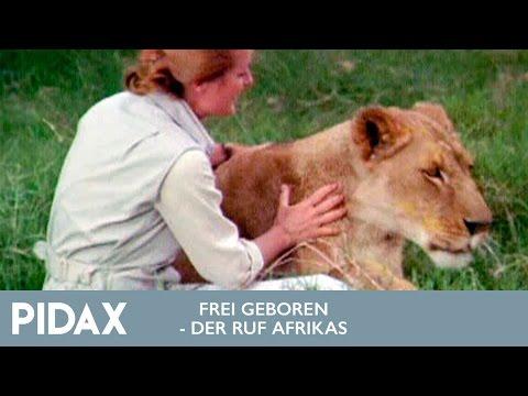 Pidax - Frei Geboren - Der Ruf Afrikas (1974, TV-Serie)