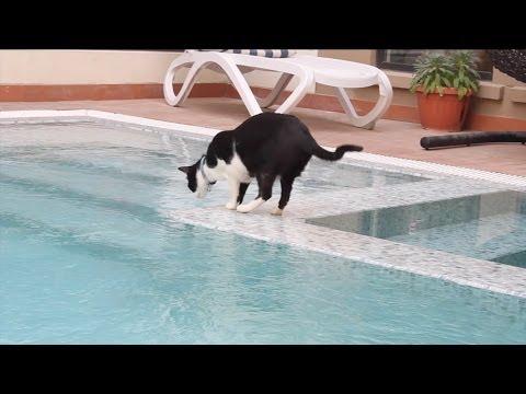 77e8a9f78c CAT swimming like a BOSS