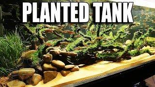 MY PLANTED AQUARIUM - EXPLAINED