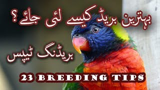 Best breeding tips for all birds in breeding season. How to breed Birds Video No. 28.