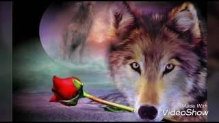 Любите тех, кто вами дорожит...  Кто ценит вас, кто в вас души своей не чает...