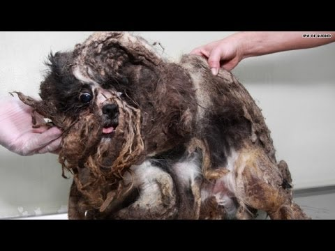 Watch this rescue dog's amazing transformation